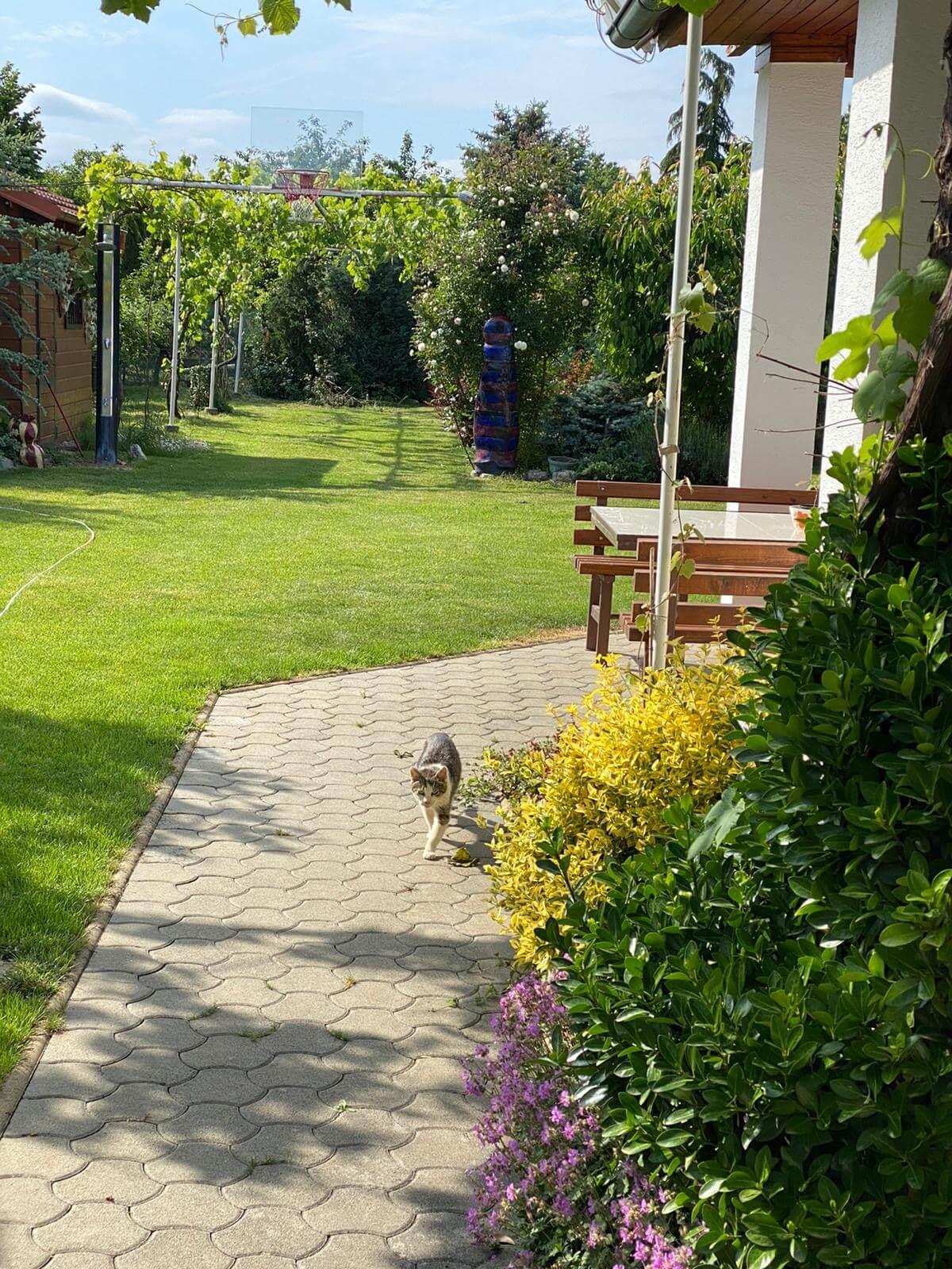 Predané: Predaj Rodinný dom v Šoporni, v tichej lokalite, pozemok 674m2, úžitková plocha 181m2,záhrada, kôlňa-7